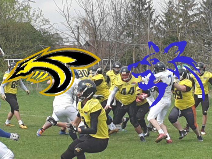 Black Hornets vs Wild Dogs